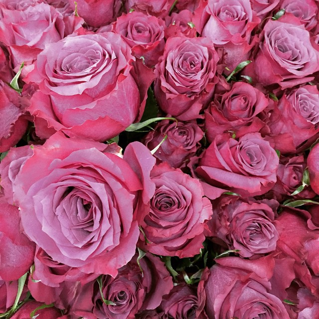 Love roses! Get 'em big ones from Spring Rose! ?????? #springrose #flowers #bouquets #foralloccasions #thepinktarha ?